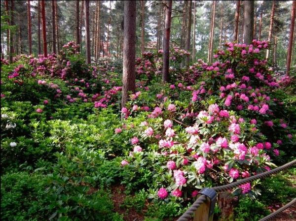 Национальные парки Финляндии