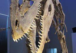 250giganotosaurus